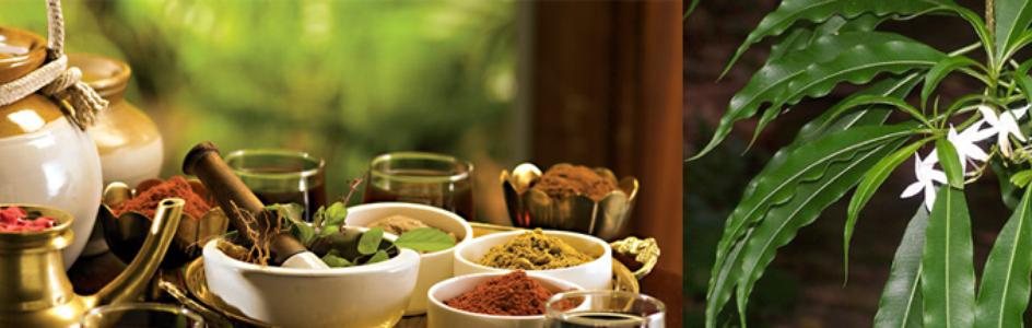 Amrit Herbs Ayurved Pvt Ltd